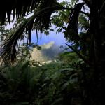 Saba Rain Forest