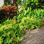 Saba Landscaping design