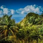 Saba Jungle
