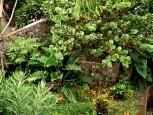 Garden Carolina Cottage Saba Troy Hill