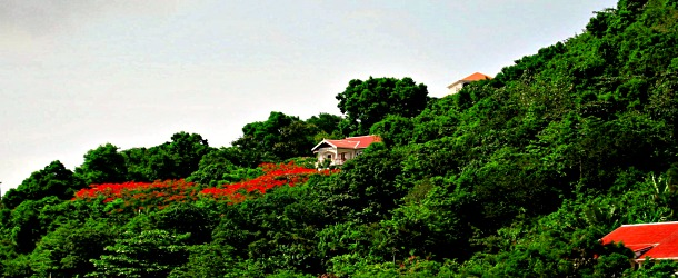 Flamboyant Tree and Saba Cottages