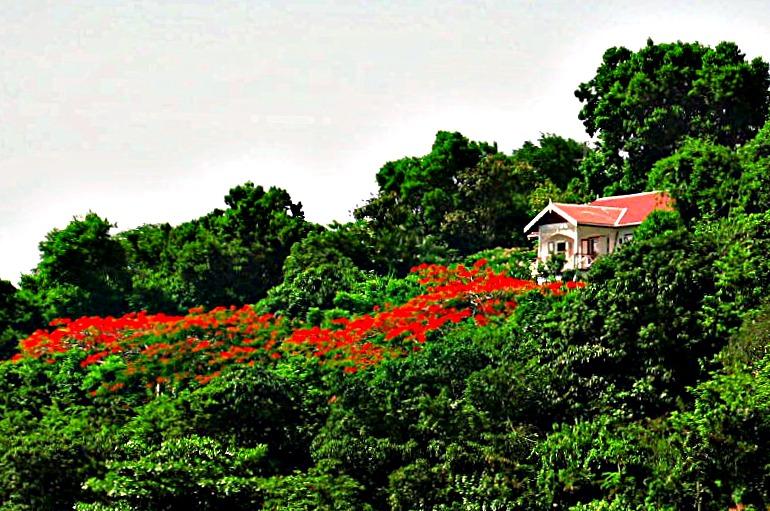 Tamarinda Cottage Booby Hill Saba