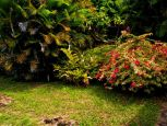 Anne's Cottage garden Windwardside Saba