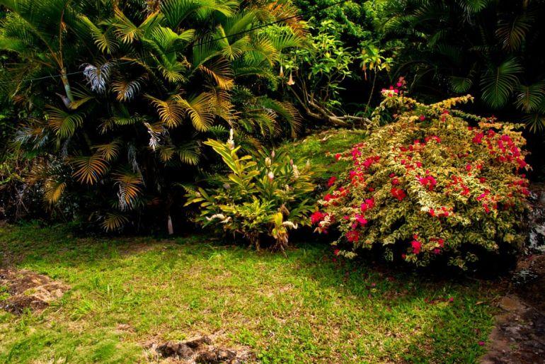 Anne's Cottage garden Windwardside Saba