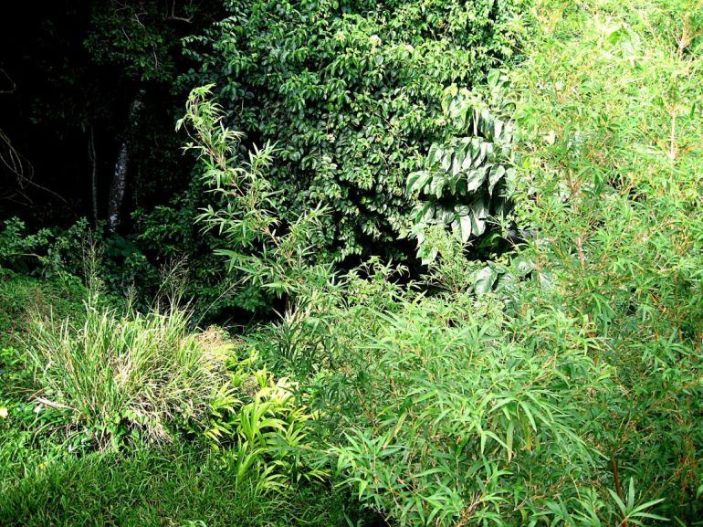 Leaf Resort Land Troy Hill Saba
