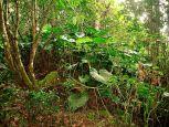 Leaf Resort Troy Hill Saba