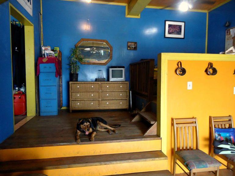 Saba Deep Dive Business Office