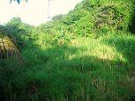 Under Mses Land For Sale Saba