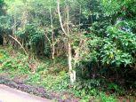 Under Moses Windwardside Saba