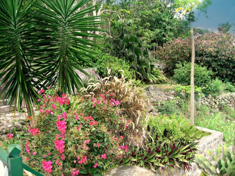 Althea Cottage Garden Saba