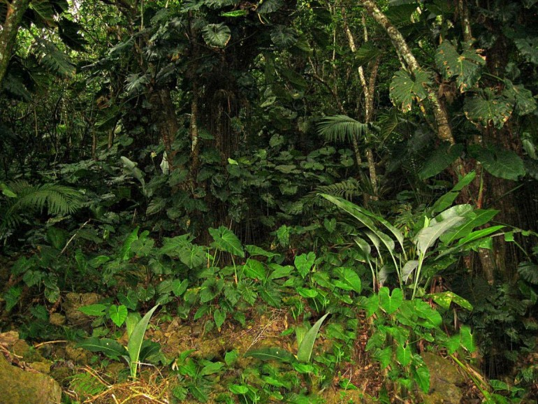 Ecolodge Rain Forest Saba