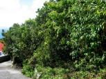 Johnny's Ground Saba Land For Sale