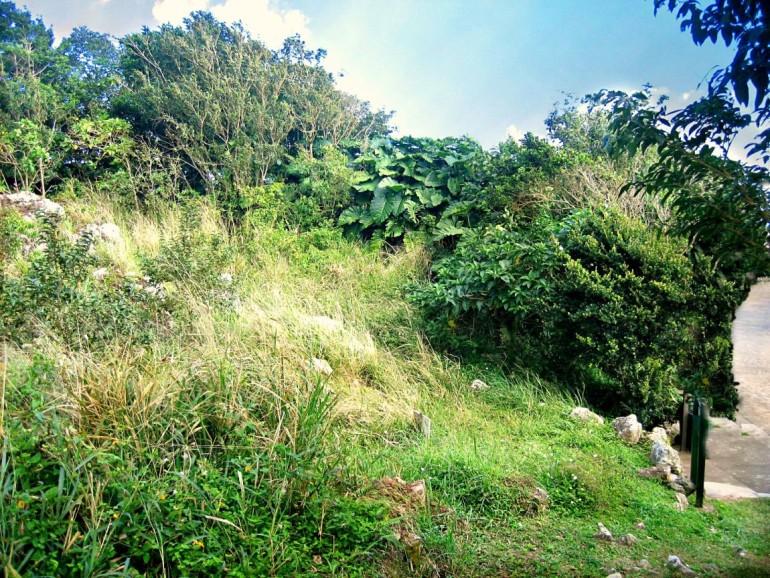 Upper Hell's gate Land For Sale Saba