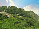 Windwardside Lad For Sale Albert & Michael Saba Island Properties