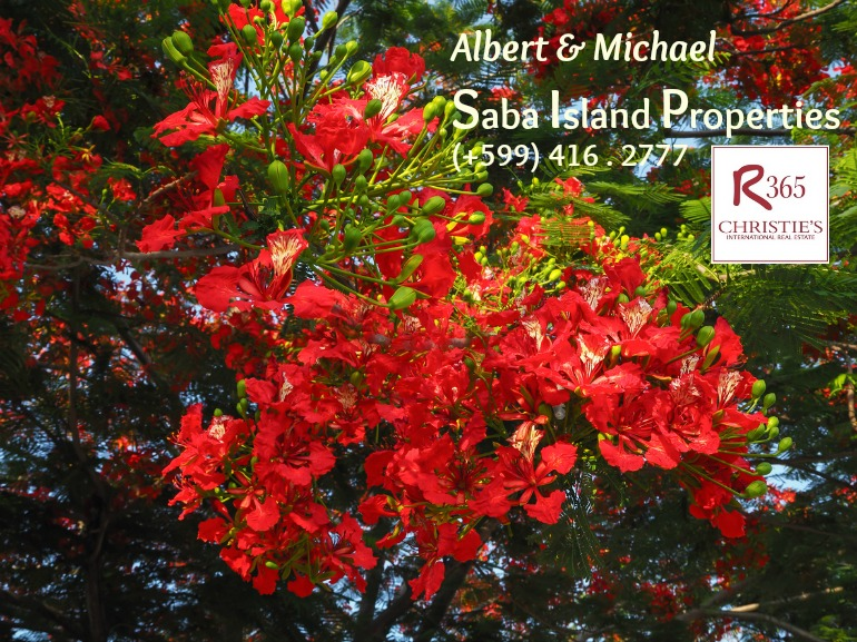 Saba Island Properties - Albert & Michael