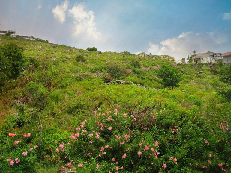 Lower Hell's Gate Land For Sale - Albert & Michael - Saba Island Properties