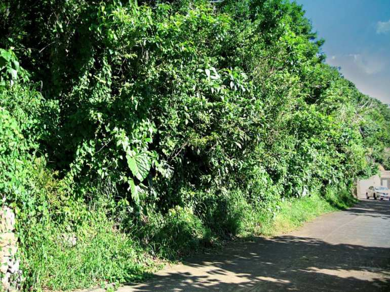 Mt. Scenery Land For Sale - Albert & Michael - Saba Island Properties