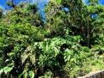 Mt. Scenery Road Land For Sale - Albert & Michael - Saba Island Properties