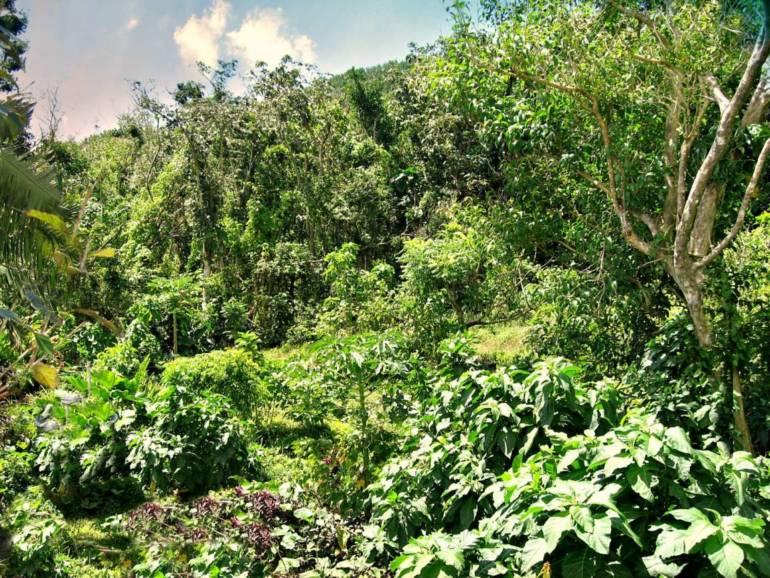 Land at Rendez-Vous - Albert & Michael - Saba Island Properties