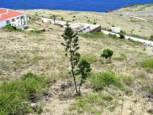 Flat Point Land For Sale - Albert & Michael - Saba Island Properties